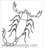 Outline Of A Scorpion