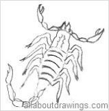 how to keep scorpions out of sandbox
