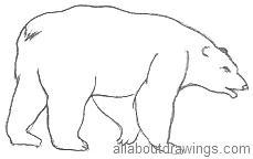 Bear Outline