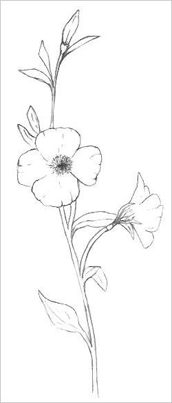 Outline Wildflower