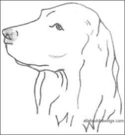 Dog Head Drawing