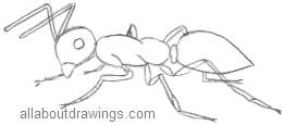 Ant Outline