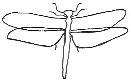 Outline Of A Dragonfly