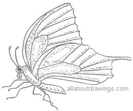 Butterfly Outlines