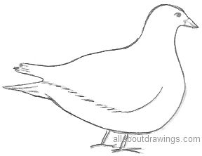 Dove Drawing Outline
