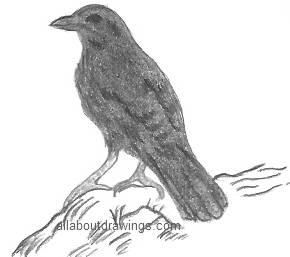 Raven Drawings