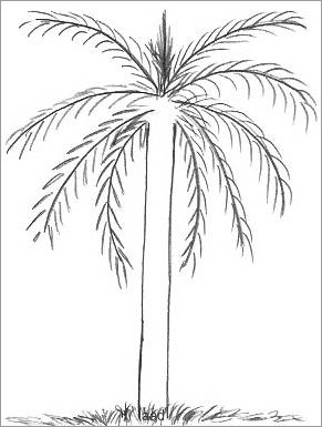 Palm Tree Outline