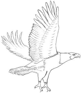 Eagle Pencil Drawings