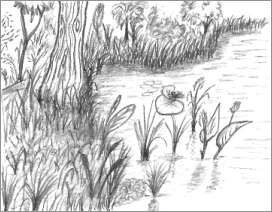 A Nature Drawing