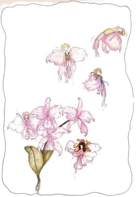 Orchid Fairies