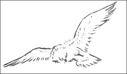 Sketch Of An Eagle