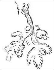 Branch Sketch