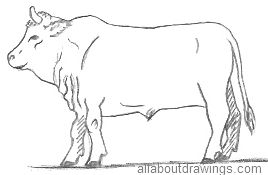 Bull Drawing Outline