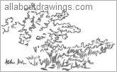 Bush sketch