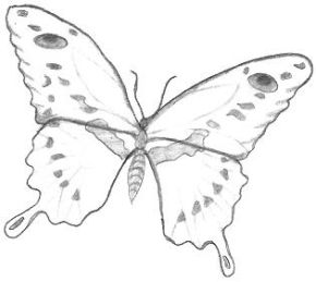 Butterfly Drawings on cool things to try