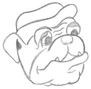 Cartoon Bulldog Drawing