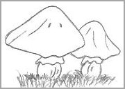 Cartoon Mushroom Drawing