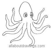 Cartoon Octopus Drawing