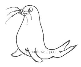 Cartoon Seal Drawing