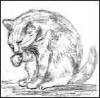 Sketch of cat licking