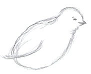 Chick Drawing Step 4
