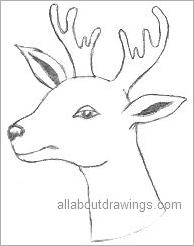 Christmas Reindeer Drawing