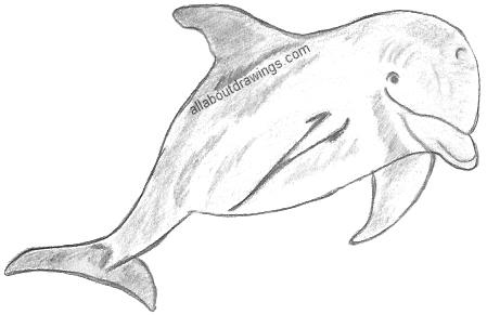 http://www.allaboutdrawings.com/image-files/dolphin-drawings.jpg