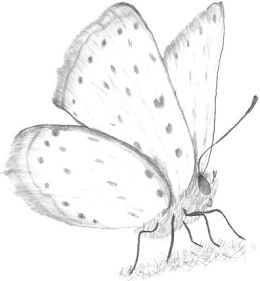http://www.allaboutdrawings.com/image-files/drawing-of-a-butterfly.jpg