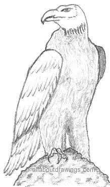 Eagle Rock Drawing