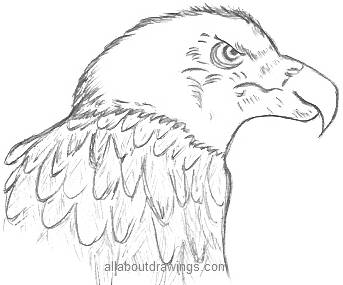 Eagle Head Drawing  Eagle Head Pencil Drawing Easy