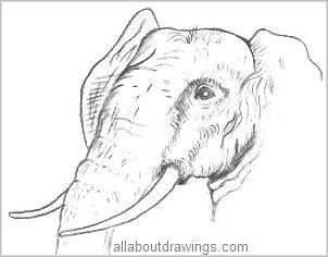 elephant-drawing.jpg (221×177)