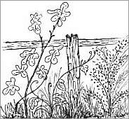 Fence and Flowers Drawing