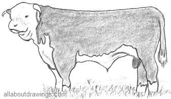 Bull Drawings In Pencil