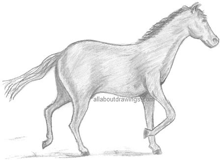 Easy Pencil Drawings Of Horses Simple Horse