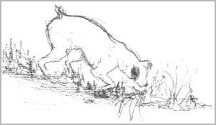 Left hand dog drawing