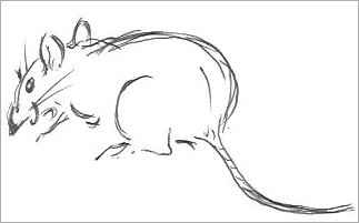 Line Drawing Mouse