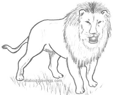 lion-drawing.jpg (280×235)