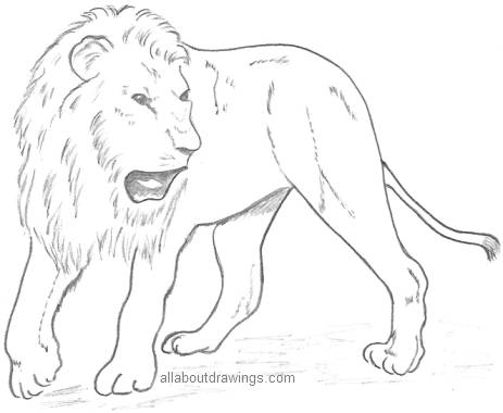 lion-pencil-drawing.jpg (375×294)