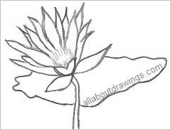 Drawings of lotus blossoms lotus flower outline mightylinksfo