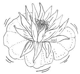 Love Pictures Draw on To Begin  Look For The Type Of Easy Pencil Drawings Like This Lotus