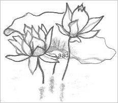 Lotus Flower Drawings