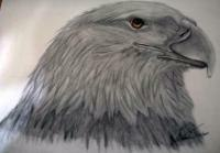 Eagle Drawing By Michelle
