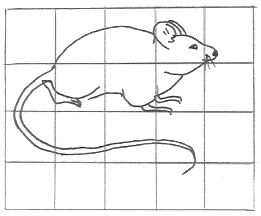 Grid Drawing Of A Mouse