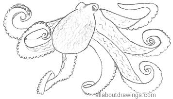 Octopus Drawings In Pencil