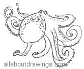 Octopus Drawings
