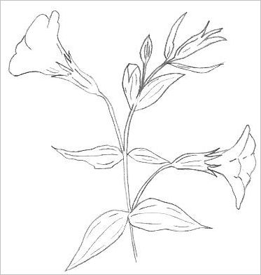 Easy Drawings Of Flowers In Pencil Easy Flowers To...