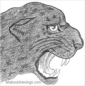 Panther Drawings
