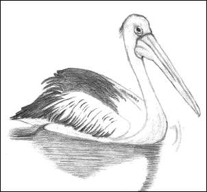 Pelican Using Grid