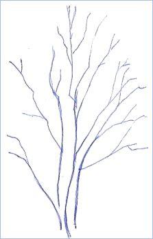 Pen Drawing Tree