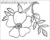 Prairie Rose Outline
